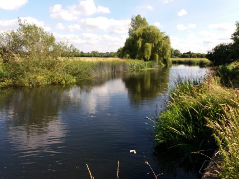 A Good River for Perch