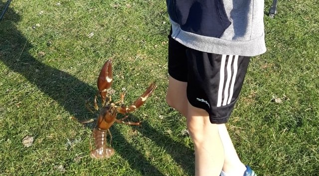 A Crayfish From the River