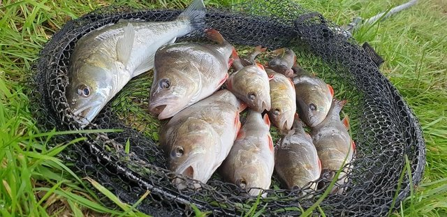 The kind of fish you can catch fishing with grubs