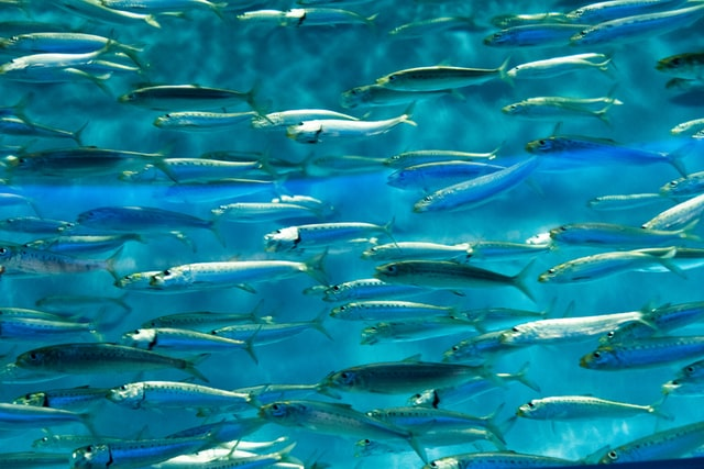 A small school of fish